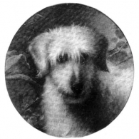 'Bandie' (or Bandy) K.C.S.B. Vol. 1. (3039) owned by Rev. W. J. Mellor, also by Capt. P. Lindoe, Bred by Capt. Hamilton. Unknown pedigree. From a painting by Geroge Earl.
