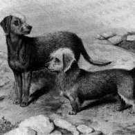 James Locke's 'Doctor' and Hemming's Bedlington 'Geordie' (circa 1879)