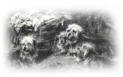 2charles-cooks1894_250_bear