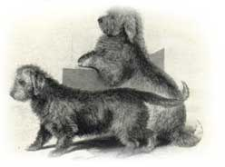 4rough-puck-1859_bear