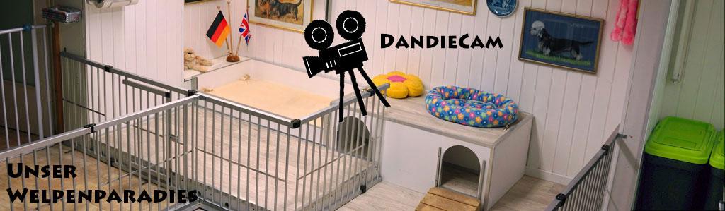 2015-11-01_Zuchtraum-DandieCam